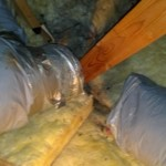 Attic Rodent Damage