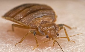 bed-bug Treatments