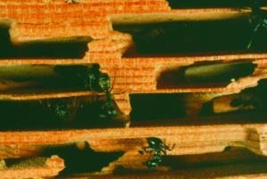carpenter ant nest