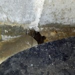 mice pest control pictures
